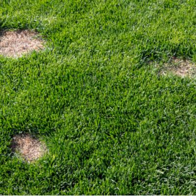 lawn damage